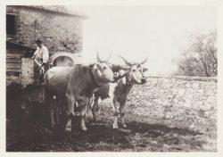02 Lo scarico del carro - Montefioralle (Greve in Chianti)
