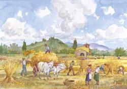 11 Vita Rurale - La mietitura del grano