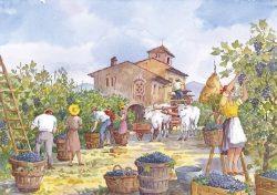 13 Vita Rurale - Raccolta dell'uva (la vendemmia)