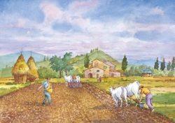 COD: 18 Vita Rurale - La semina