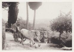 03 Partenza giornaliera verso i campi - Montefioralle (Greve in Chianti)