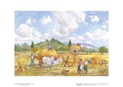 Poster 03 Vita Rurale: La mietitura del grano